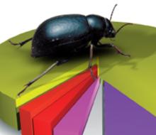 Cd Biodiversidad en Gráficas